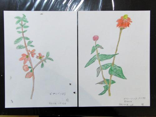色鉛筆画 ~ O様 植物展 ~_e0222340_15172354.jpg
