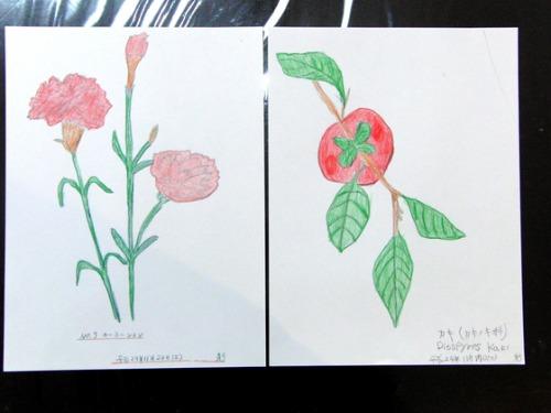 色鉛筆画 ~ O様 植物展 ~_e0222340_1519348.jpg