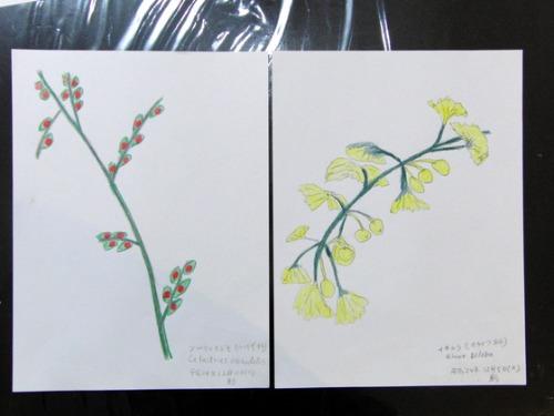 色鉛筆画 ~ O様 植物展 ~_e0222340_1521073.jpg