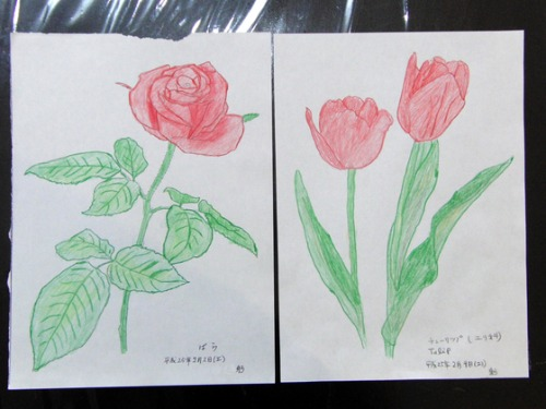 色鉛筆画 ~ O様 植物展 ~_e0222340_1526679.jpg