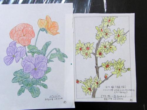 色鉛筆画 ~ O様 植物展 ~_e0222340_1528711.jpg