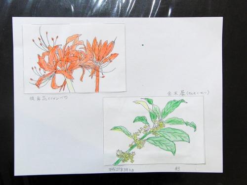 色鉛筆画 ~ O様 植物展 ~_e0222340_15301488.jpg