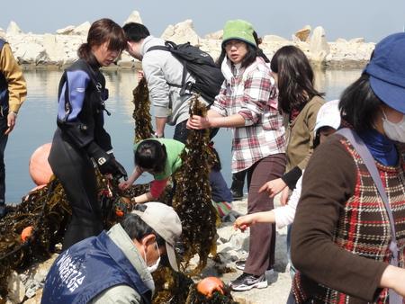 「みんなでワカメを育てよう!収穫祭」 in せんなん里海公園_c0108460_21445174.jpg