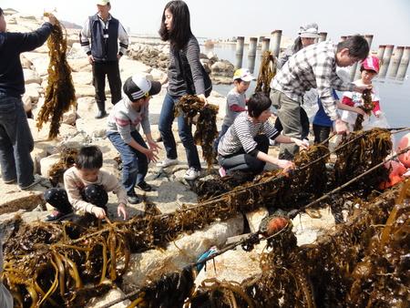 「みんなでワカメを育てよう!収穫祭」 in せんなん里海公園_c0108460_21455460.jpg