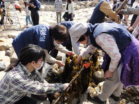 「みんなでワカメを育てよう!収穫祭」 in せんなん里海公園_c0108460_21462511.jpg