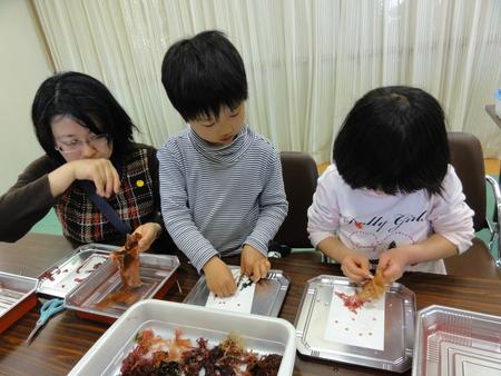 「みんなでワカメを育てよう!収穫祭」 in せんなん里海公園_c0108460_2153339.jpg
