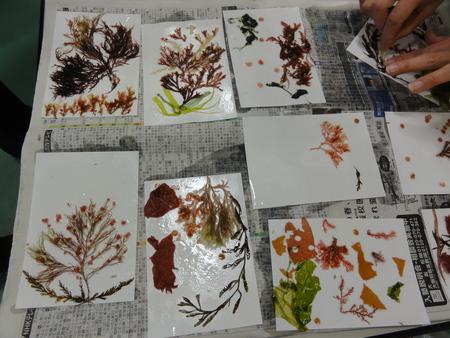 「みんなでワカメを育てよう!収穫祭」 in せんなん里海公園_c0108460_21541587.jpg