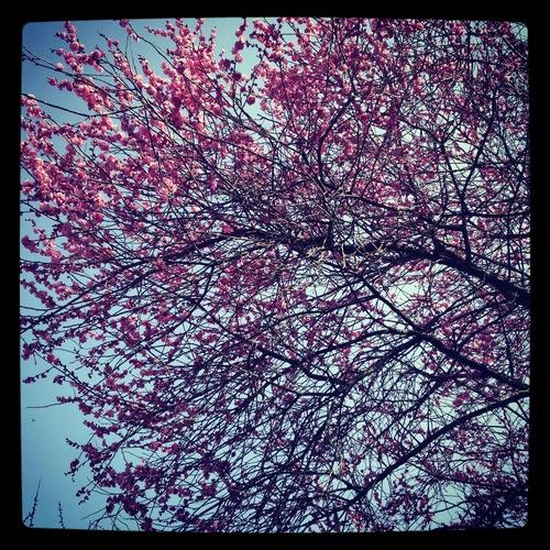 春、梅と醤油と陶芸_d0185565_22441031.jpg