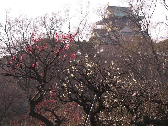 梅 2013 <大阪城公園 梅林>_f0021869_23434922.jpg