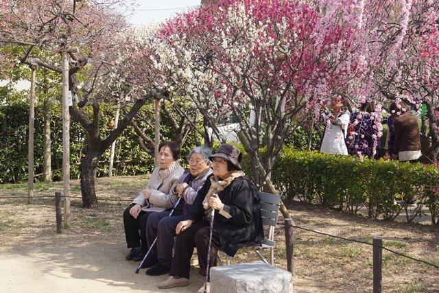 梅の花と可愛い犬たち、気仙沼市 菅原市長に期待、気仙沼菅原市長頑張ってください、梅林が復興を応援_d0181492_22365338.jpg
