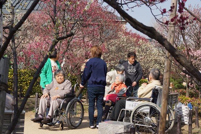 梅の花と可愛い犬たち、気仙沼市 菅原市長に期待、気仙沼菅原市長頑張ってください、梅林が復興を応援_d0181492_2237212.jpg
