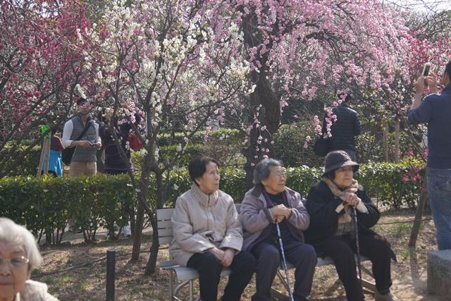梅の花と可愛い犬たち、気仙沼市 菅原市長に期待、気仙沼菅原市長頑張ってください、梅林が復興を応援_d0181492_2237876.jpg