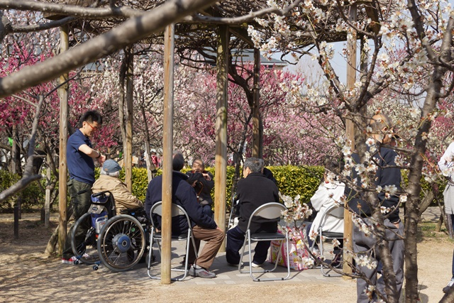 梅の花と可愛い犬たち、気仙沼市 菅原市長に期待、気仙沼菅原市長頑張ってください、梅林が復興を応援_d0181492_2256177.jpg