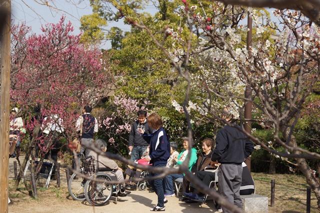 梅の花と可愛い犬たち、気仙沼市 菅原市長に期待、気仙沼菅原市長頑張ってください、梅林が復興を応援_d0181492_22563840.jpg