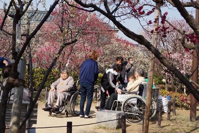 梅の花と可愛い犬たち、気仙沼市 菅原市長に期待、気仙沼菅原市長頑張ってください、梅林が復興を応援_d0181492_2256481.jpg