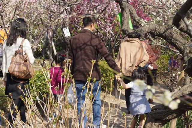 梅の花と可愛い犬たち、気仙沼市 菅原市長に期待、気仙沼菅原市長頑張ってください、梅林が復興を応援_d0181492_2303243.jpg