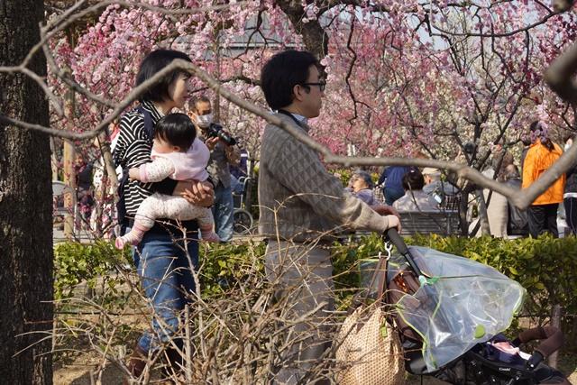 梅の花と可愛い犬たち、気仙沼市 菅原市長に期待、気仙沼菅原市長頑張ってください、梅林が復興を応援_d0181492_2315026.jpg
