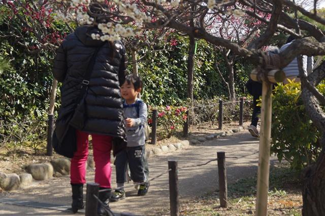 気仙沼の復興にかける菅原市長を応援、頑張れ気仙沼、小野寺大臣にお願い、甲東公民館の梅林は日本一_d0181492_23205974.jpg