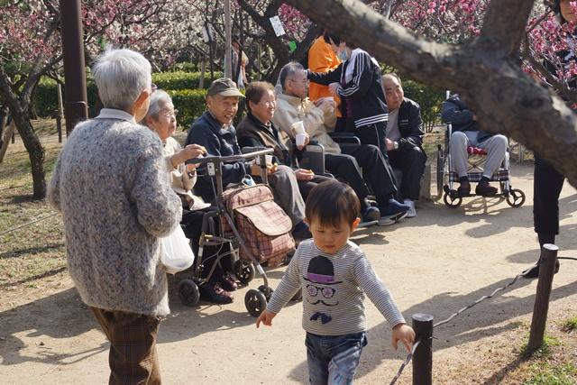 梅の花と可愛い犬たち、気仙沼市 菅原市長に期待、気仙沼菅原市長頑張ってください、梅林が復興を応援_d0181492_2374262.jpg