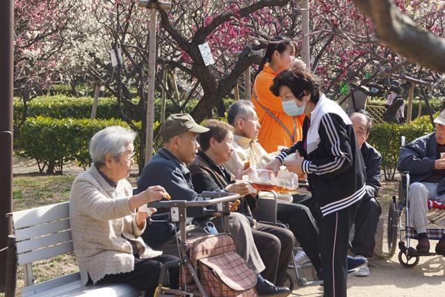梅の花と可愛い犬たち、気仙沼市 菅原市長に期待、気仙沼菅原市長頑張ってください、梅林が復興を応援_d0181492_237919.jpg