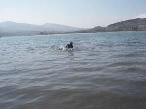 初泳ぎ〜〜〜!_b0084194_1505945.jpg