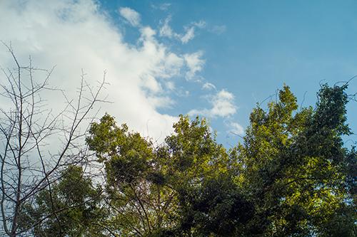 アトリエからの空、花粉症の筈なのに?_b0194208_22585587.jpg