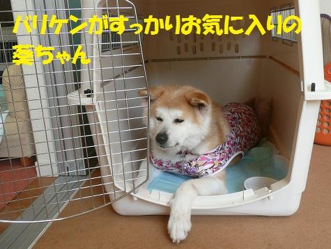 f0121712_1472611.jpg