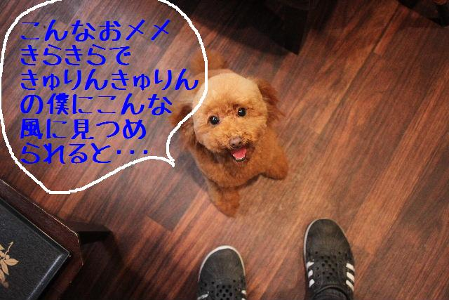 b0130018_0204839.jpg
