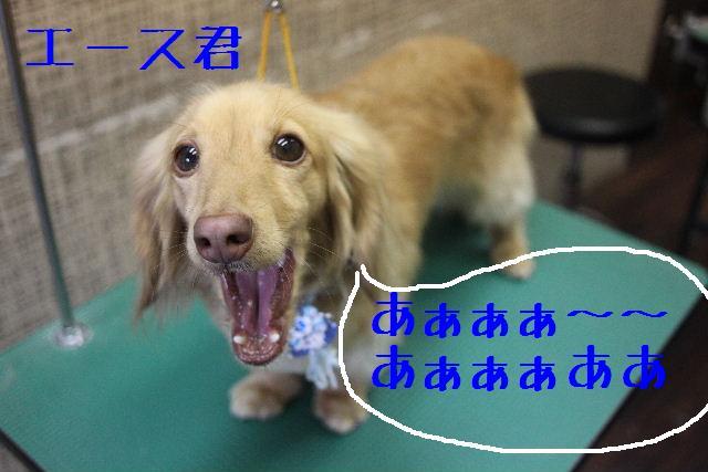 b0130018_0224699.jpg