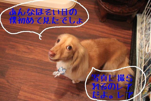 b0130018_0225599.jpg