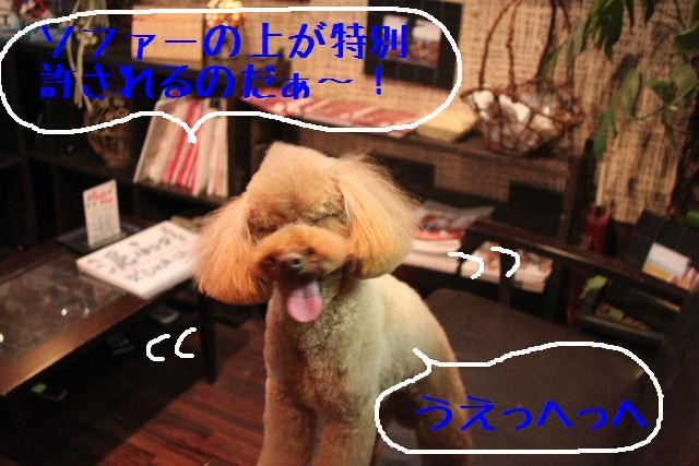 b0130018_035310.jpg