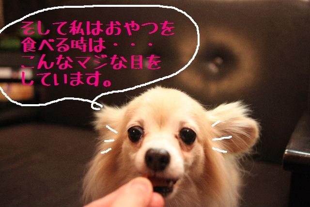 b0130018_091339.jpg