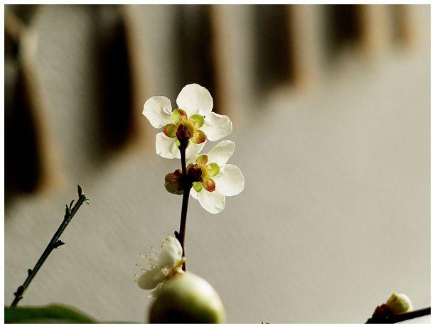 梅のかほり_c0042324_20415944.jpg