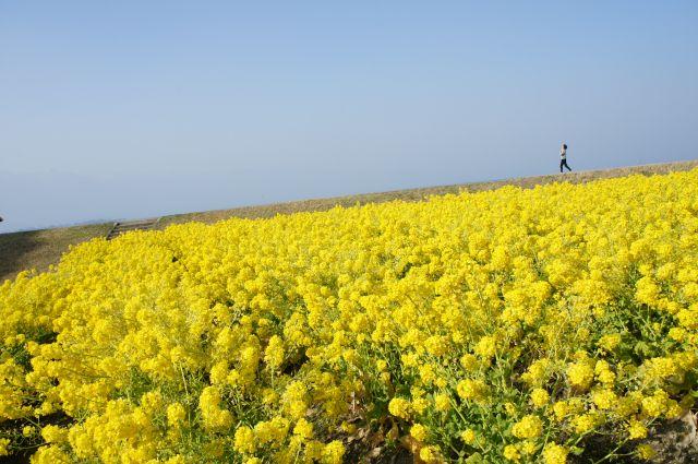 琵琶湖の春は_f0155431_21325421.jpg