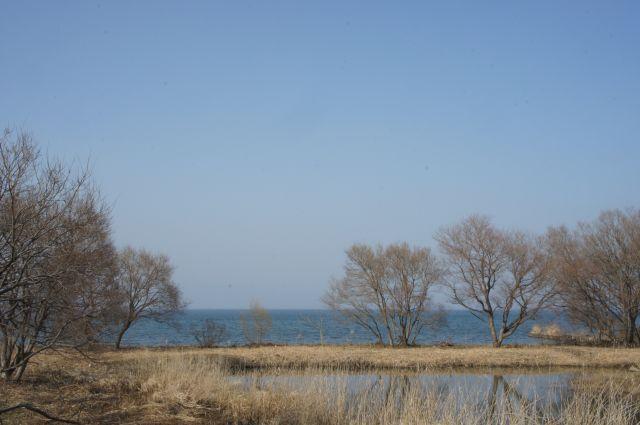 琵琶湖の春は_f0155431_21341459.jpg