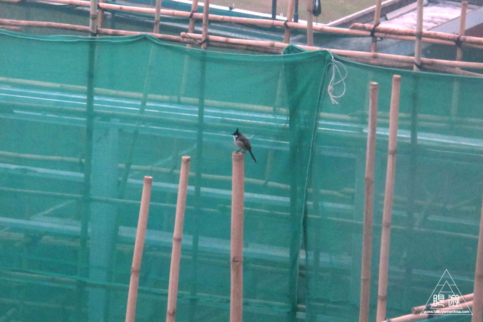156 Wan Chai ~香港の野鳥~_c0211532_2321429.jpg