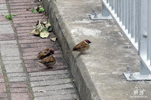 156 Wan Chai ~香港の野鳥~_c0211532_2373197.jpg