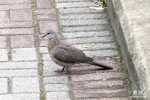 156 Wan Chai ~香港の野鳥~_c0211532_238475.jpg