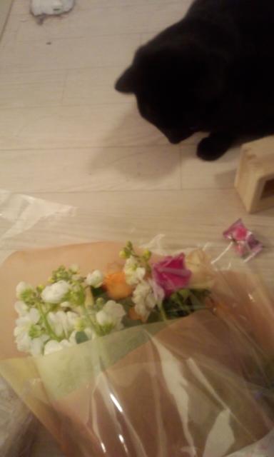 お花ありがとうございます_e0114246_4322241.jpg