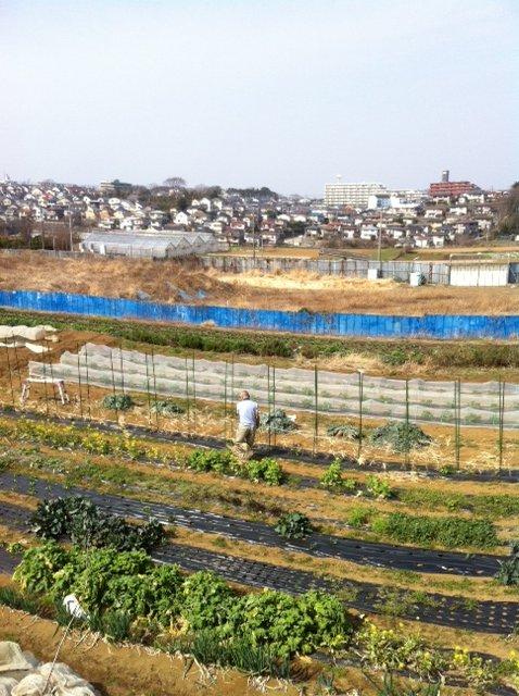 今朝から エンドウ豆の櫓を建てます_c0222448_12521120.jpg