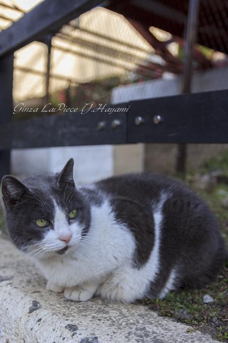 猫のいる風景 門仲の猫 また太ったか?_b0133053_0444858.jpg
