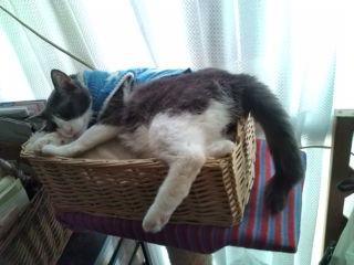 猫たち近況_a0064067_23313641.jpg