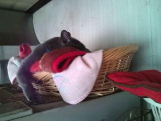 猫たち近況_a0064067_2331498.jpg