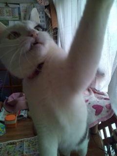 猫たち近況_a0064067_23322373.jpg