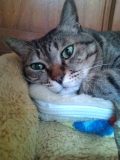 猫たち近況_a0064067_23323591.jpg