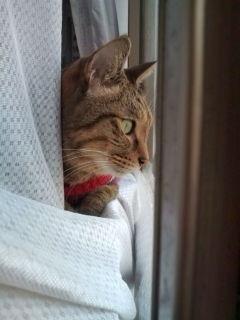 猫たち近況_a0064067_2332769.jpg