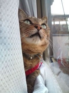 猫たち近況_a0064067_23544670.jpg