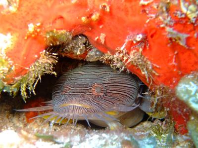 カリブ海の魚たち♪              COZUMEL/MEXICO_e0184067_1732130.jpg