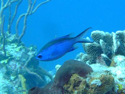 カリブ海の魚たち♪              COZUMEL/MEXICO_e0184067_1733124.jpg