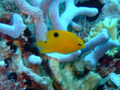 カリブ海の魚たち♪              COZUMEL/MEXICO_e0184067_1734090.jpg